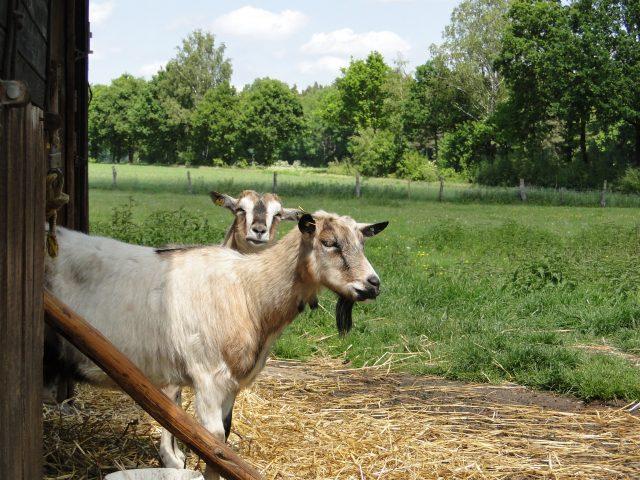 Landwirtschaft und Viehbetrieb auf dem Ferienhof Stegen