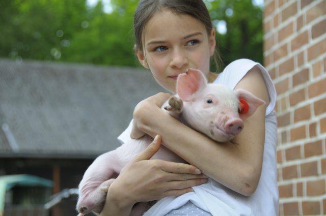 Bauernhof mit Schweinen in der Lüneburger Heide
