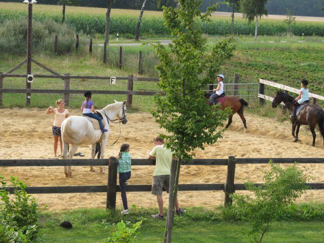 Vom Reitplatz in den Pferdestall