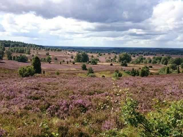 Ruhe und Erholung in der Lüneburger Heide