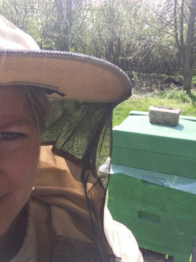 Die Bienen werden bei uns gehegt und gepflegt