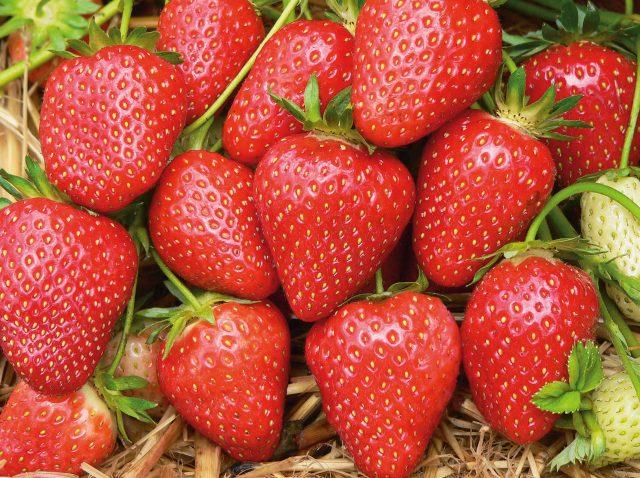 Erdbeersorte Malwina