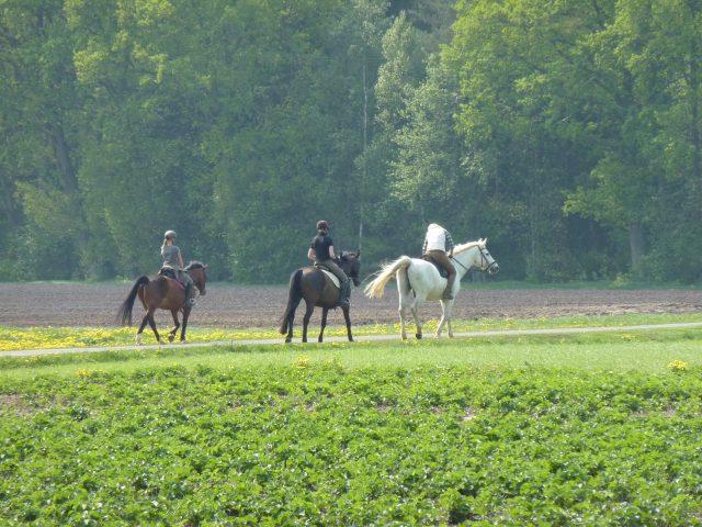 Reiterlebnis auf dem Ferienhof Stegen in der Lüneburger Heide